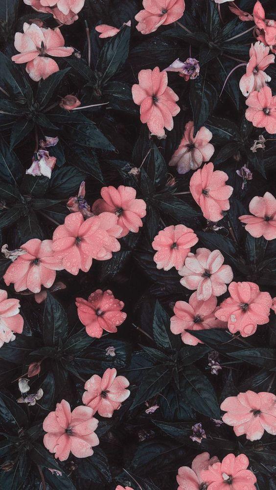 wallpaper-11