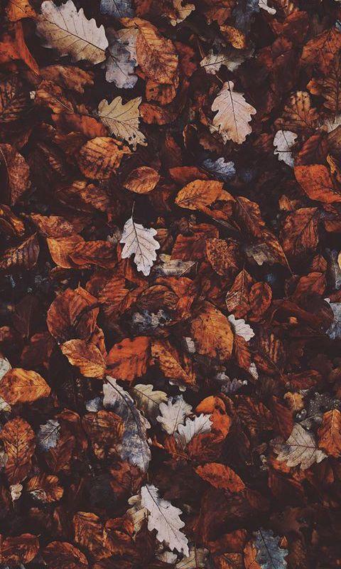 Duvar kağıtları serisi wallpaper 189