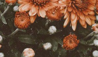 Duvar Kağıdı – wallpaper 729